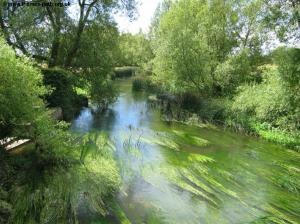 The reed-filled river at Castle Eaton