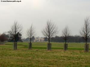 Hampton Court Park, with Hampton Court Palace ahead